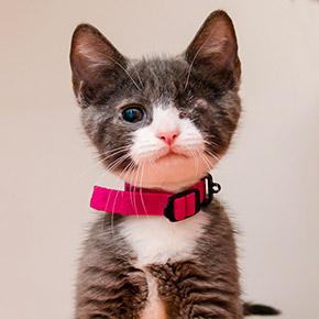 Special needs pets to sponsor