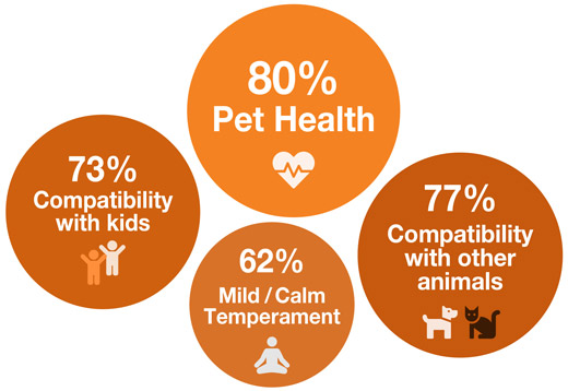 Most important considerations when looking for a new pet