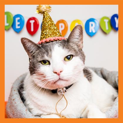 Cat wearing a birthday hat
