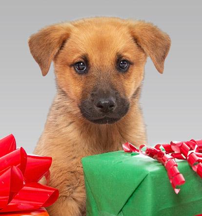 Best Friends Animal Society: No-Kill Animal Rescue & Advocacy