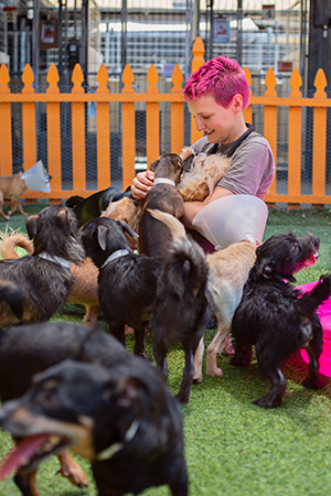 Woman with magenta colored hair sitting on the ground, surrounded by the small dogs who had been rescued
