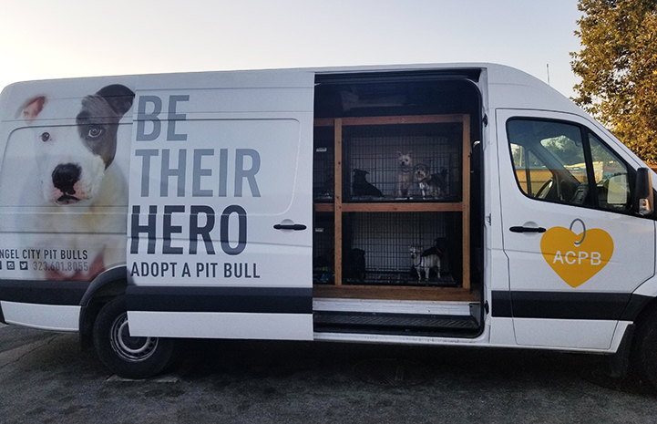 Dogs rescued from a hoarding situation in kennels in an Angel City Pit Bulls van