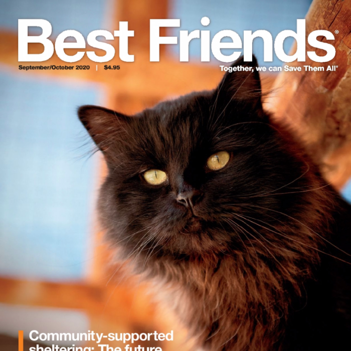 Black cat on cover of Best Friends Magazine