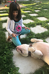 Young girl kneeling down next to Walter the white mastiff, who is rolled over on his back