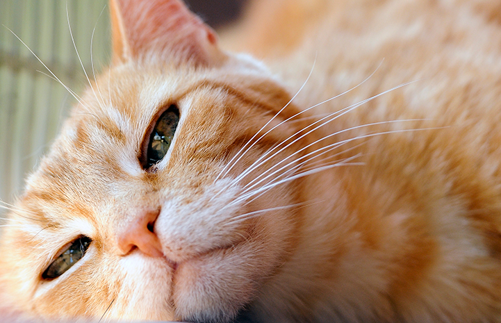 Wondrous Cat Adopted After 17 Years Best Friends Animal Society Download Free Architecture Designs Itiscsunscenecom