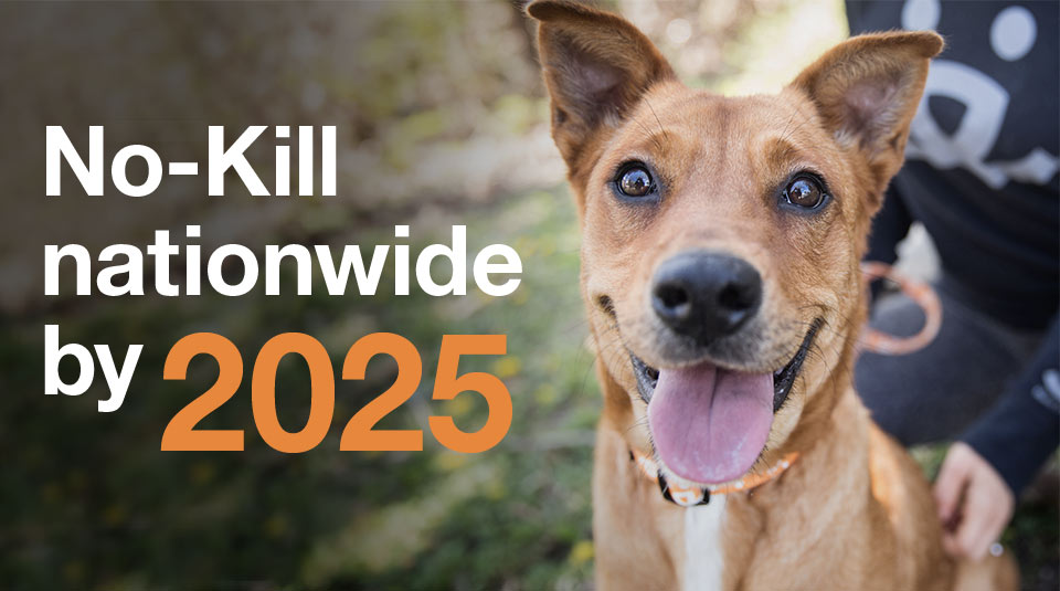 No-Kill nationwide by 2025