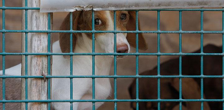 Puppy Mills & Inhumane Breeding of Dogs | Best Friends