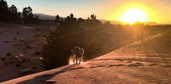 https://bestfriends.org/Dogs%20love%20running%20through%20the%20coral%20pink%20sand%20dunes%20near%20Kanab%2C%20Utah.