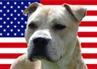Bully Paws- Pit Bull Patriots (Fredericksburg, Virginia) logo of circle with bully breed dog shadow and American flag background