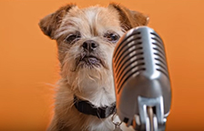 Beans the terrier dog in behind a microphone