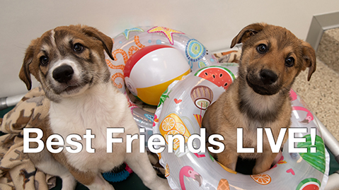 two cute puppies at Best Friends on facebook live