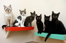Spay Neuter Pets   Best Friends Animal Society