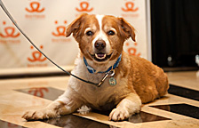 National Conference dog attendee