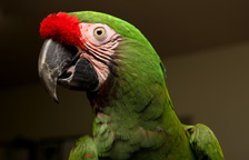 Parrot Adoption | Best Friends Animal Society