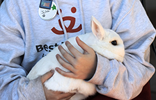 White bunny rabbit being cuddled by a volunteer