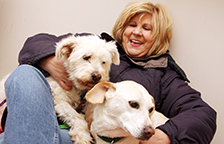 Volunteer woman with Labrador and terrier dogs