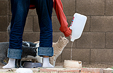 Feral cat colony caregiver providing water to stray cats