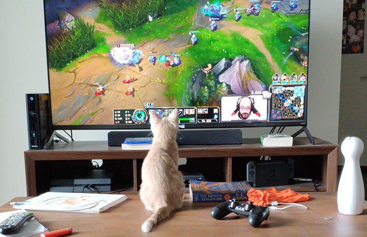 Peach the kitten looking at the television where a video game is being played