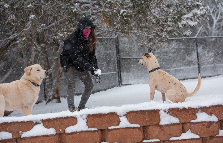 Person outside in the snow between two dogs about ready to throw a snowball