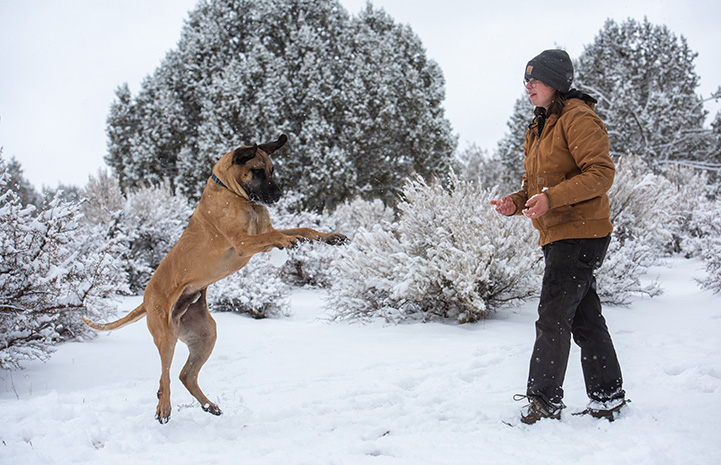Person throwing a snowball to Knotts the dog who misses catching it