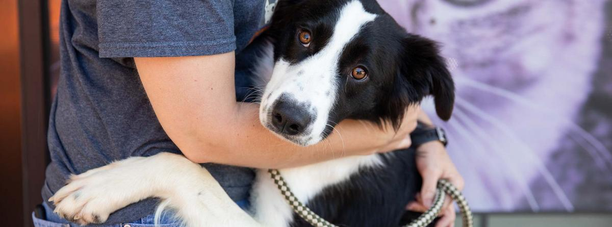 Black and white border collie type dog hugging a person who is hugging him back