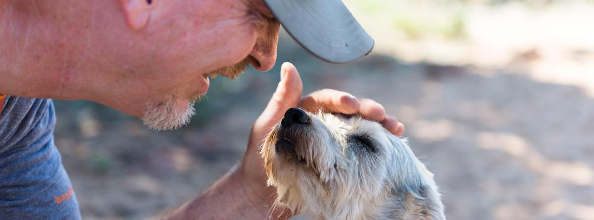 Man wearing a hat bending over to pet the head of a white scruffy terrier type dog
