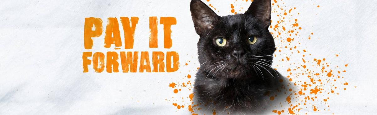 Black cat next to Pay If Forward graphic and orange splatters