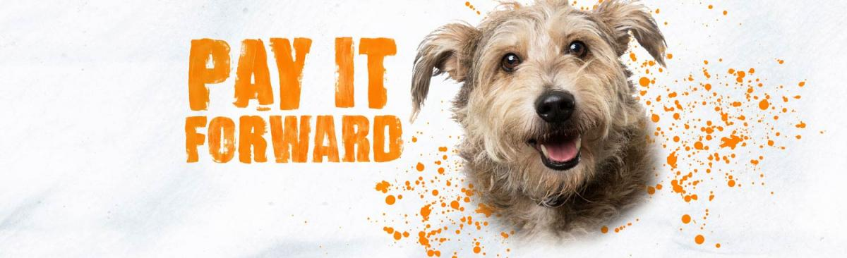 Pay It Forward graphic with tan terrier dog head