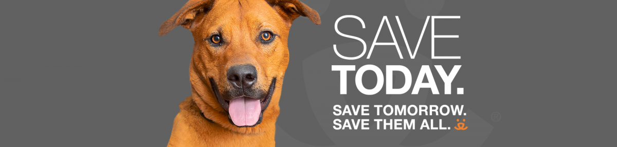 Save Today. Save Tomorrow. Save Them All.