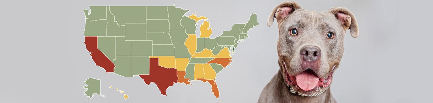Data map of United States color coded by state next to a smiling gray pit bull terrier dog