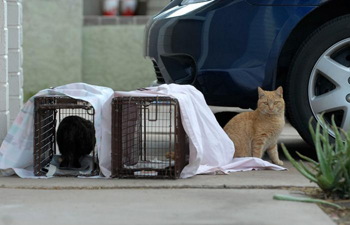 Orange tabby cat sitting next to two humane traps