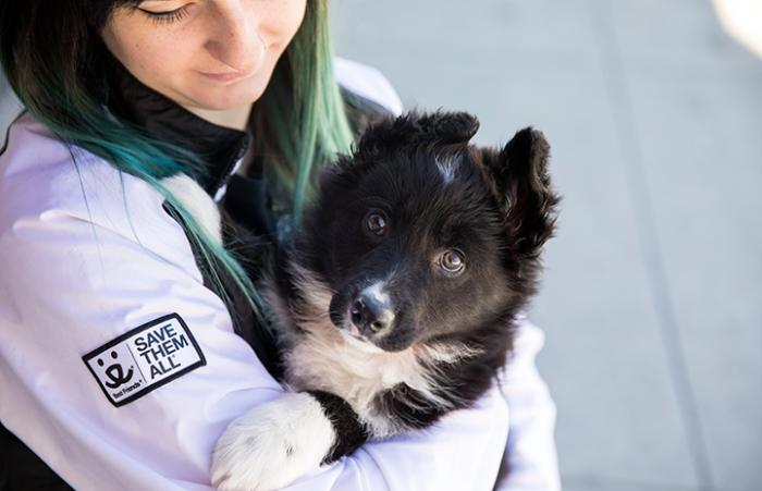 Woman wearing a Save Them All sweatshirt holding black and white puppy with upright ears