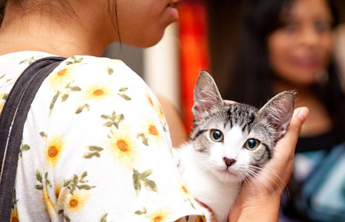 Woman holding a white and tabby cat at an animal shelter