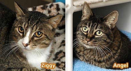 Ziggy and Angel the cats from Animal Friends Rescue Project