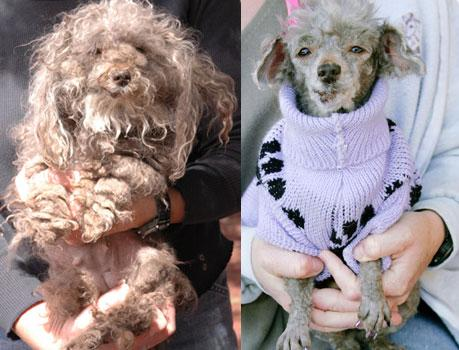 The ugly duckling dog's before and after photos