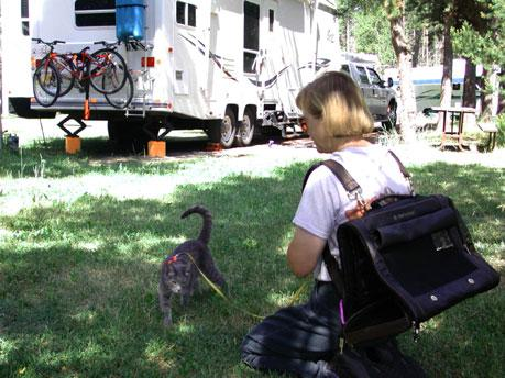 Cat by the RV he travels in