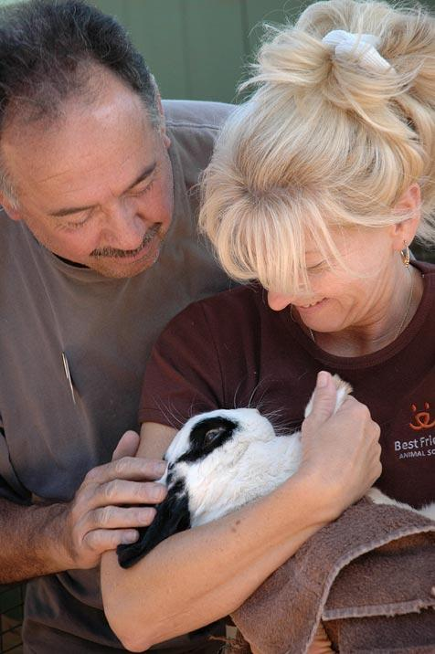Holland lop rabbit named Traveler and his mom and dad