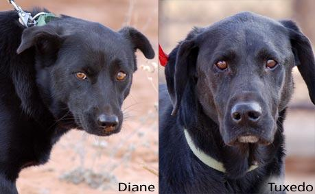 Two all-black dogs, Diane and Tuxedo