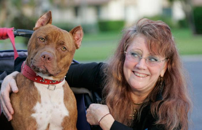 Red the partially paralyzed pit bull from Hurricane Katrina with his new person