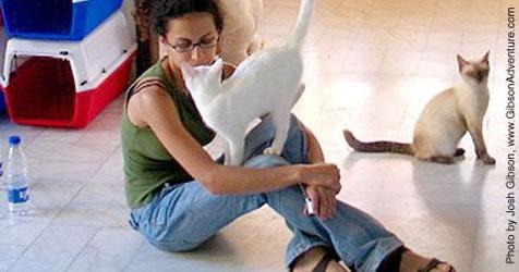 White cat climbing on woman who is sitting on the floor with a Siamese cat in the background