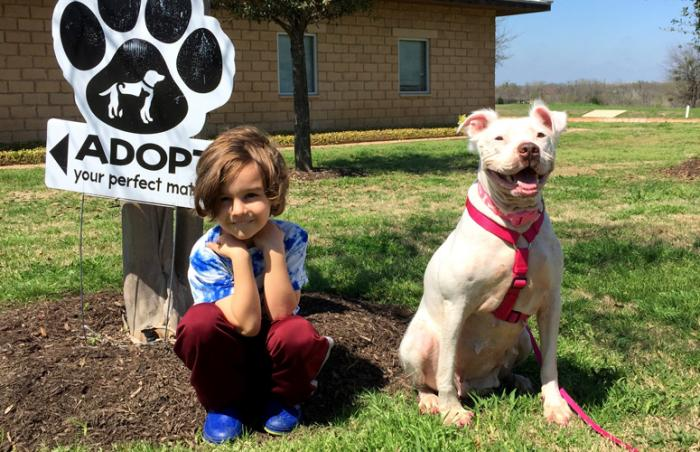 Daisy the white American bulldog mix found her home thanks to an adoption promotion