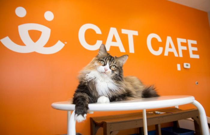 Patsy at the Cat Cafe at Best Friends Pet Adoption Center in Salt Lake City in the Sugar House neighborhood