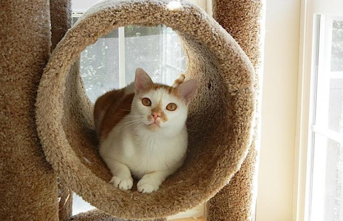 Calvin the cat in a cat tree