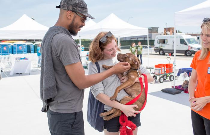Cashew the dog at an adoption event in New York City