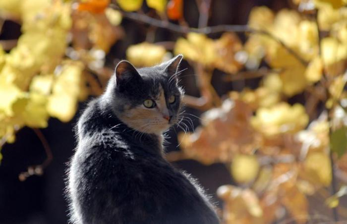Feral cat with autumn leaves