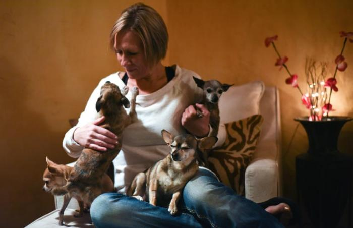 "Chiquita the ""super senior"" Chihuahua with her foster family"