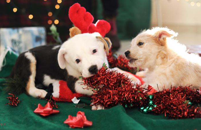 Pretzel and Scope, adoptable puppies from Best Friends