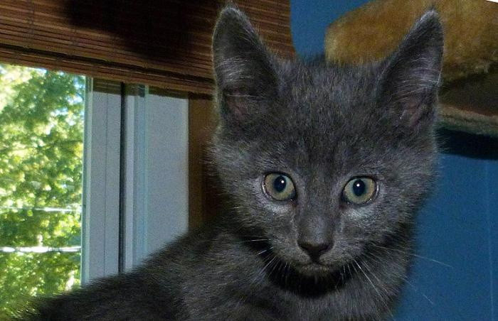 Cinder a kitten from Mt. Olive TNR Project in Budd Lake, New Jersey