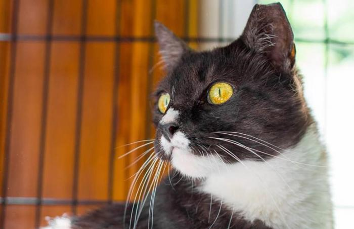 Cricket the chirping cat is one of the many cats helped by the Baltimore Community Cats Project (a TNR program)