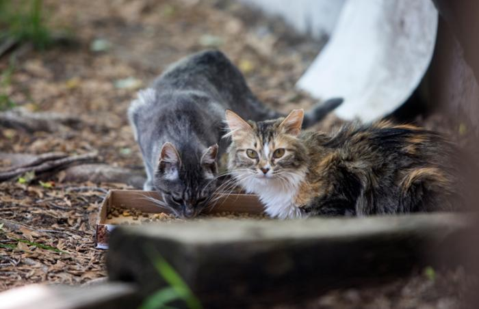 Community (feral and stray) cats in Layton, Utah, assisted by teenager McKenzie Howard and NKUT